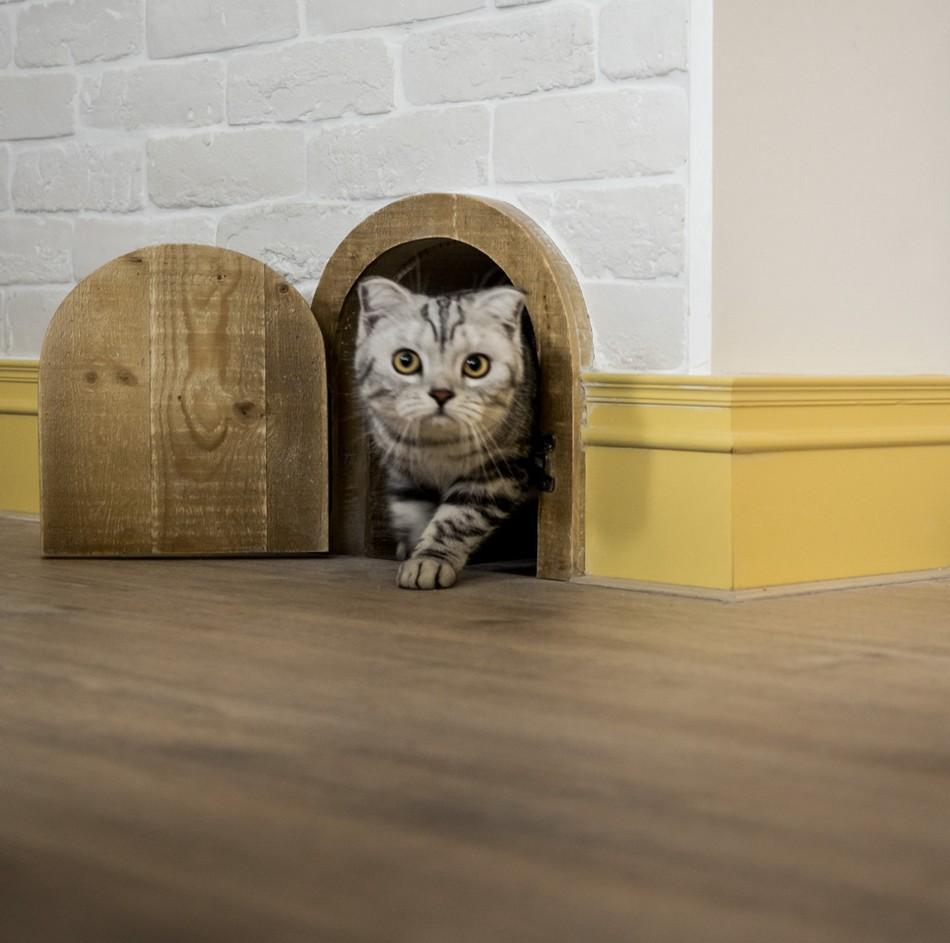 Винтажный индустриальный дом для пары и их трех кошек в Тайване